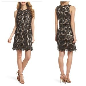 Eliza J Lace Shift Dress Petite